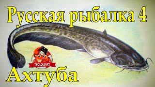 Русская рыбалка 4 Ахтуба Осётр Сом Судак