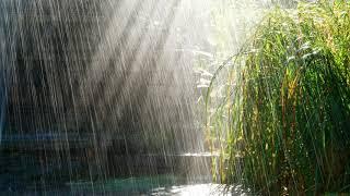 Giọt mưa và em bé - Tuấn Anh 123