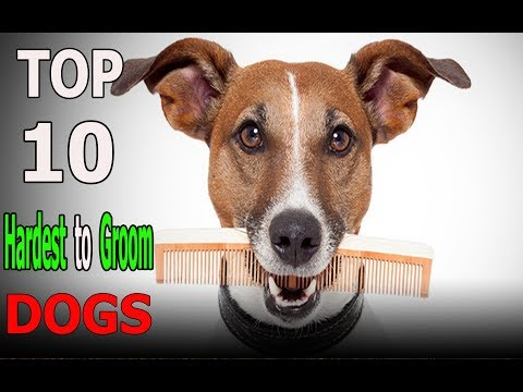 Top 10 dog breeds that are hardest to groom |Top 10 animals
