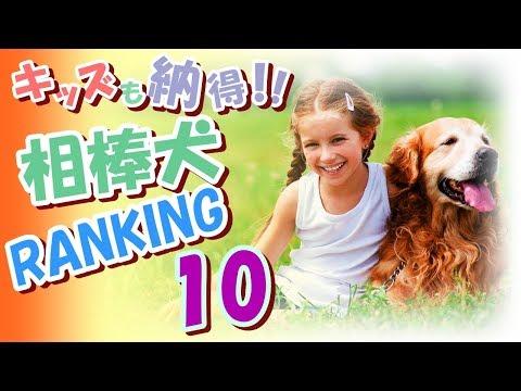 【なるほど!】子供に超人気相棒犬ランキング 10・遊び仲間が増えて超楽しい!