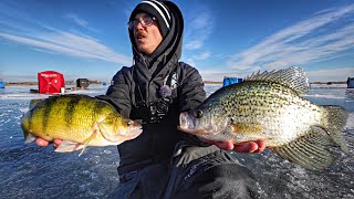 GIANT Perch/Crappie On THIN Ice!!!