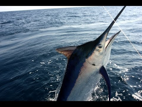 Best Puerto Vallarta Fishing - Marlin, Tuna, Dorado, Snapper