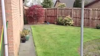 Border Terrier Jamie's Frisbee Fail