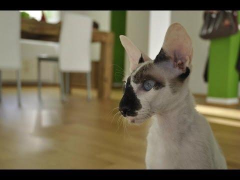 PETERBALD CAT Cuddle
