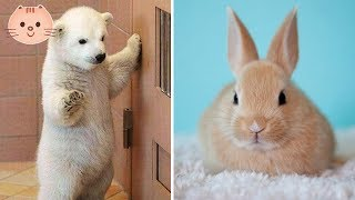 Cute Baby Animals Video Compilation Cute Moment Of The Animals - Cute Baby Animals #5 | Cute Dose