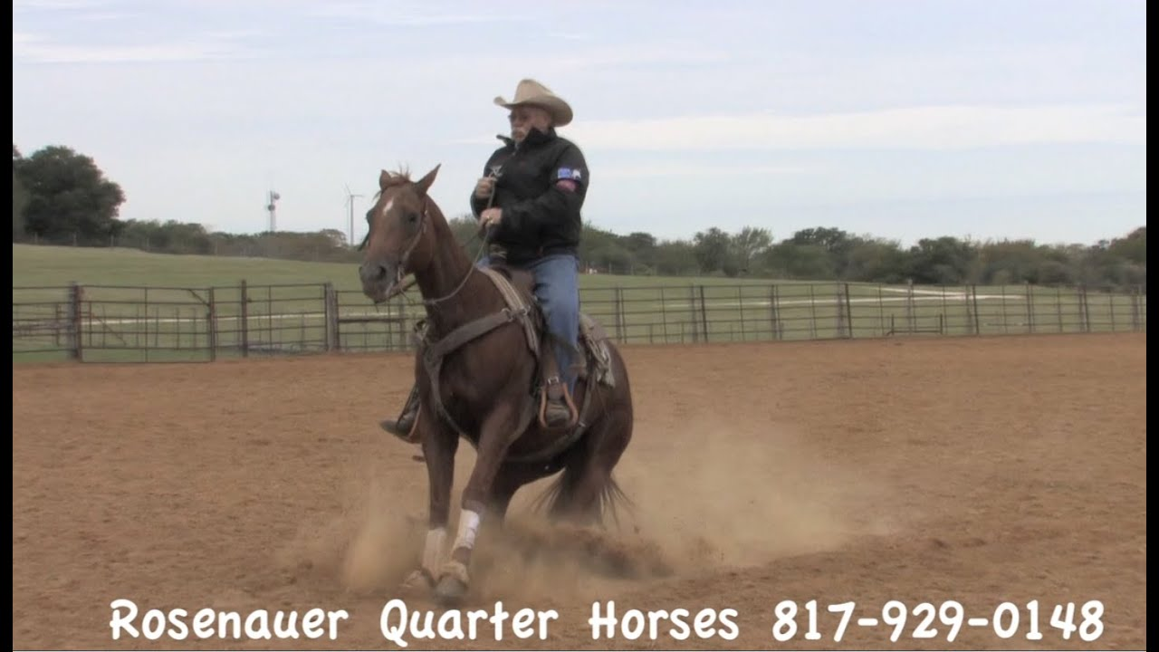 Cow Horse For Sale Burleson Texas Call Rodney At 817 929