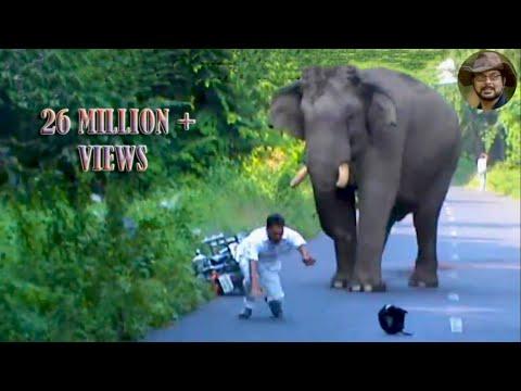 Elephant Chasing Due To Foolish Activity.