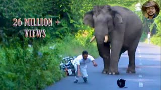 Elephant Chasing Due To Foolish Activity.