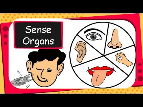 Science - Human Sense Organs and their functions - English