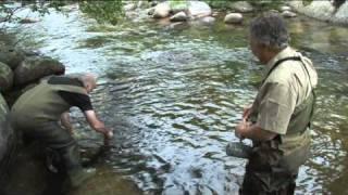La Dourbie - Itinéraire d'une rivière gatée (Partie-1)