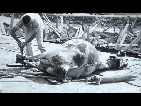 Revisiting the Destruction of the 1965 Denver Flood