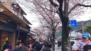 2019年3月31日 日 京都嵐山 桜の開花☆ Arashiyama Kyoto ☆ 岚山 Арашиямы