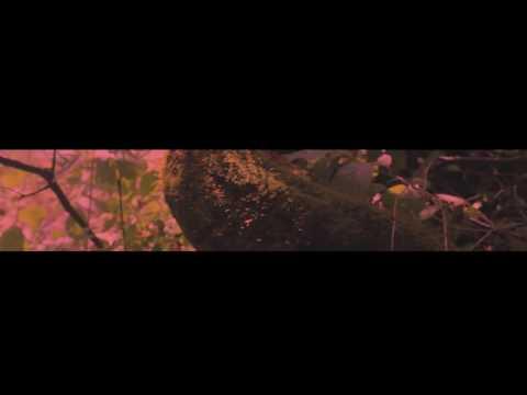 КРАСНОЕ ДЕРЕВО (2016) - Русский трейлер