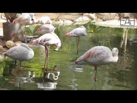 Birds Valley in Agadir - Morocco حديقة وادي الطيور باكادير