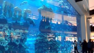 4k Uhd video of aquarium at dubai mall(Aquarium dubai mall uhd 4k., 2015-03-13T11:43:48.000Z)