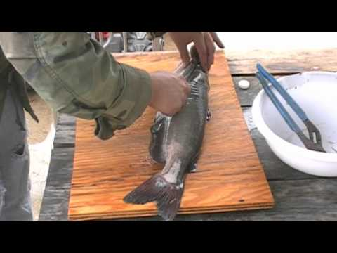 Quickest way to clean a catfish without skinning it. from YouTube · High Definition · Duration:  4 minutes 16 seconds  · 9,000+ views · uploaded on 3/30/2013 · uploaded by Jeff Smith