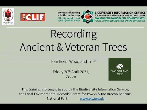 Recording Ancient & Veteran Trees