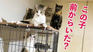 【保護猫】訳あり新入り猫さんたち