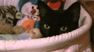 Scary Black Cat, Baby Doll Crib!