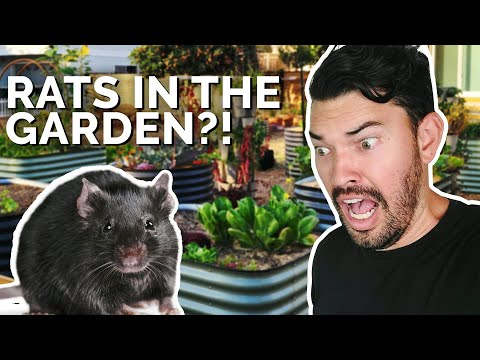 How to Prevent and Control RATS in Your Garden 🐀 😱