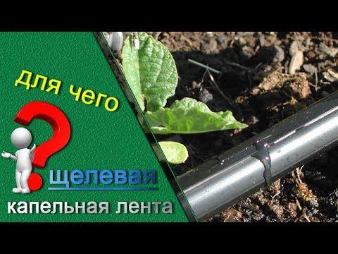 видео: Капельная лента щелевая, для чего нужна и в чем преимущества