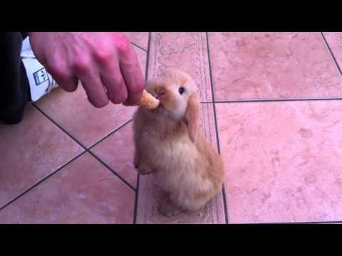 Cute 8 Week Old Rabbit Eating HD