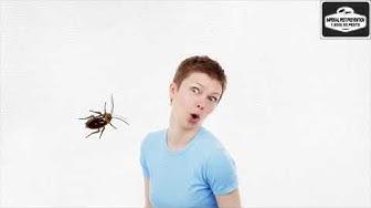 Cockroach Exterminator | Cockroach pest control