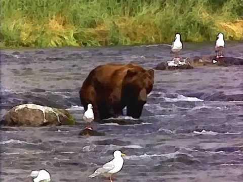 Brown bear's snoring - YouTube