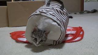 猫部屋 しぴ&みみ Cat room,Chipie and Mimi【瀬戸の兄弟猫日記】
