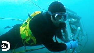 Buzos hacen esto para protegerse de los tiburones | Pesca mortal: Abulón | Discovery Latinoamérica