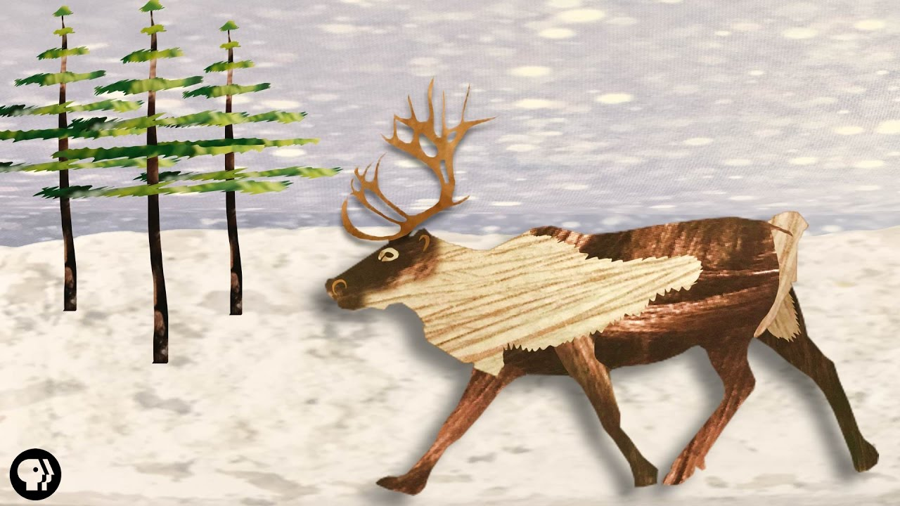 the-real-rudolph-has-bloody-antlers-and-super-vision