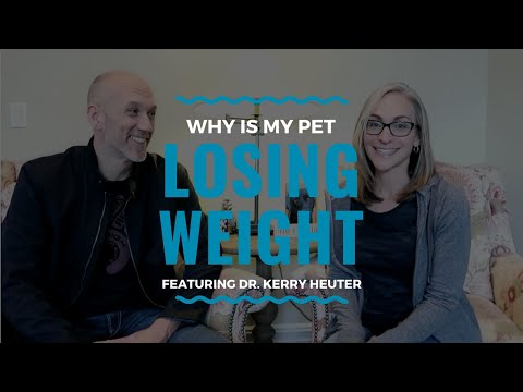 Why is My Pet Losing Weight?: Vlog 96