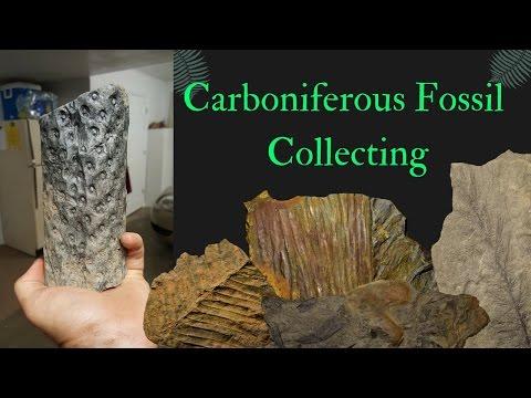 Collecting Carboniferous Fossils (Virginia)