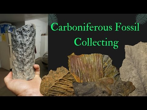 Collecting Carboniferous Fossils (Virginia)