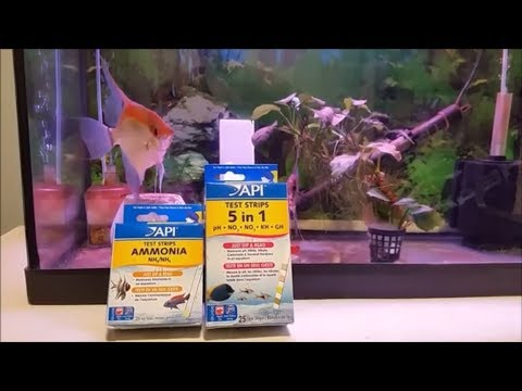 Most Important Aquarium Water Parameters - Testing Your Fish Tank Water Quality