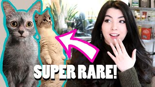 10 RARE Cat Breeds You've Never Heard Of! (Werewolf cat!?)