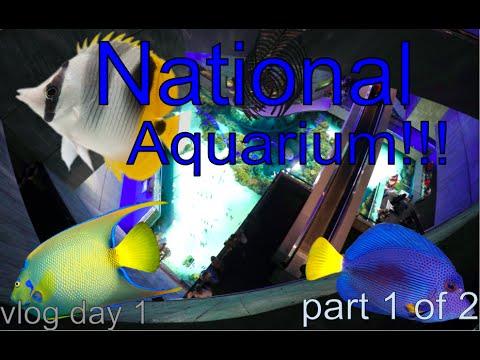 National Aquarium in Baltimore, MD Vlog!!!
