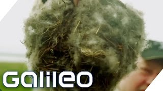 Die teuerste Bettdecke der Welt | Galileo | ProSieben