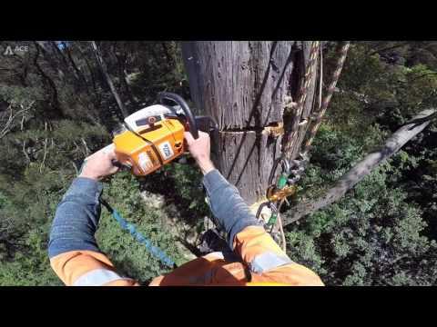 Tree Climbing Australia