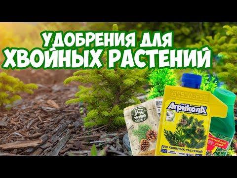 Удобрения для хвойных 🌲  Полезные советы 👍  Сад и огород с Хитсад