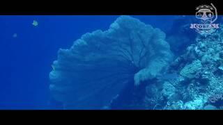 보홀다이빙 ㅣ 필리핀다이빙투어 ㅣ 푼토 포인트 [스쿠버다이빙/scubadiving/코브라다이브]puntod point
