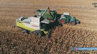 Lexion + Fendt + Fliegl - zbiór kukurydzy na ziarno