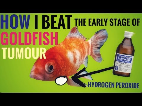 How To Treat Goldfish Tumours With Hydrogen Peroxide