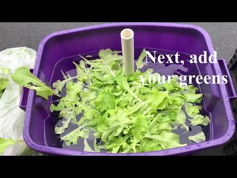 How I Clean My Greens