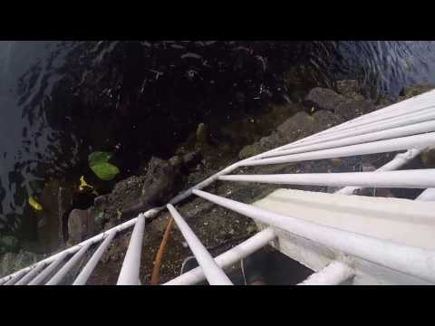 Cat Fishing in Ganga Talao Sacred Temples  - Mauritius