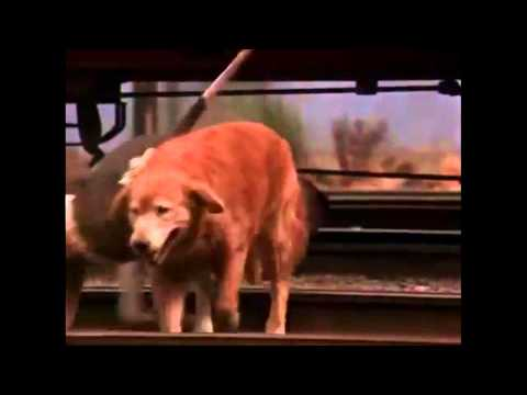 Homeward Bound:The Incredible Journey  Train Chase Music By Julian Nott