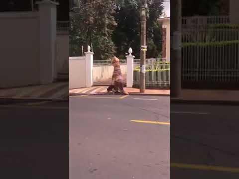 'Dinossauro' dribla quarentena e leva cachorro para passear.