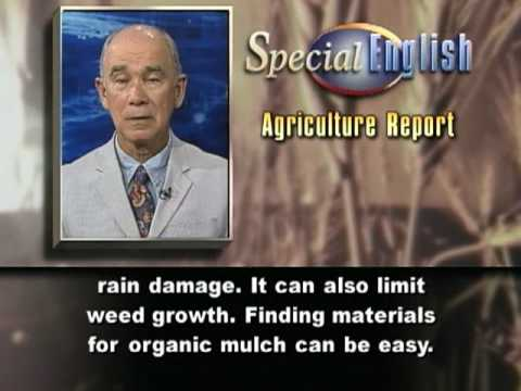VOA Learning English - Agriculture Report # 395