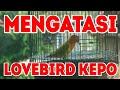Mengatasi Lovebird Kepo Di Arena Lomba Atau Gantangan  Mp3 - Mp4 Download