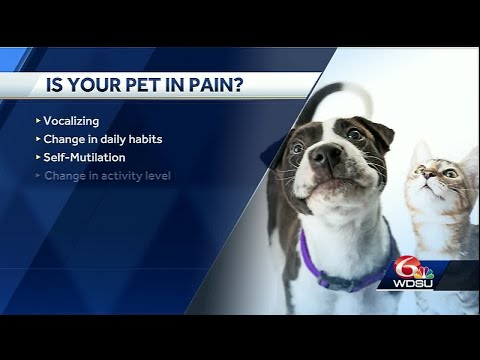 WDSU: Ask the Vet- How to tell if your pet is in pain